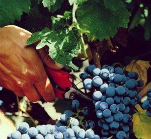 Casa Vinicola Fazio - Asia Import News