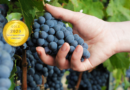 Nobel Chile : An Innovative and Traditional winery