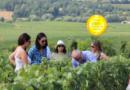 Philizot et Fils – La Marnaise Des Vinhos : Four generations of Champagnes, a legacy of quality