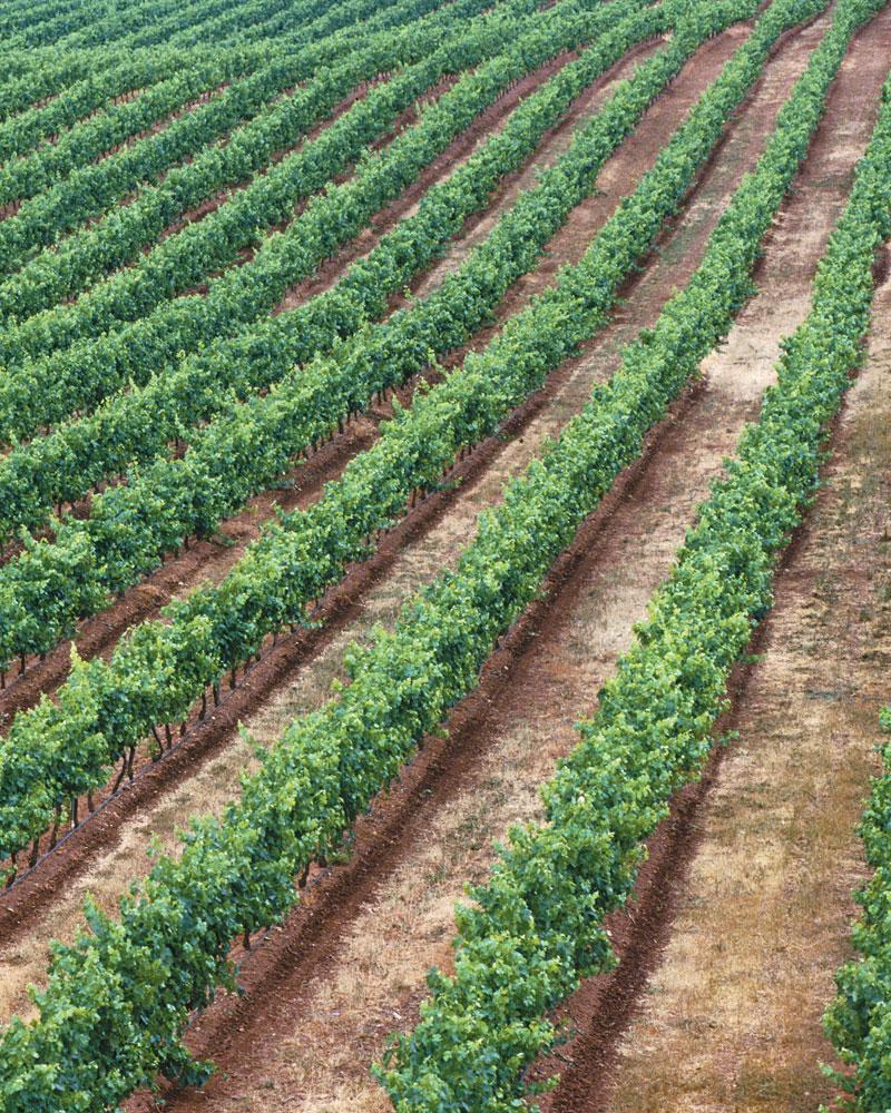 COSECHEROS Y CRIADORES (Vino de La Tierra de Castilla)