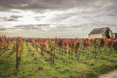 Domain Amirault vineyard