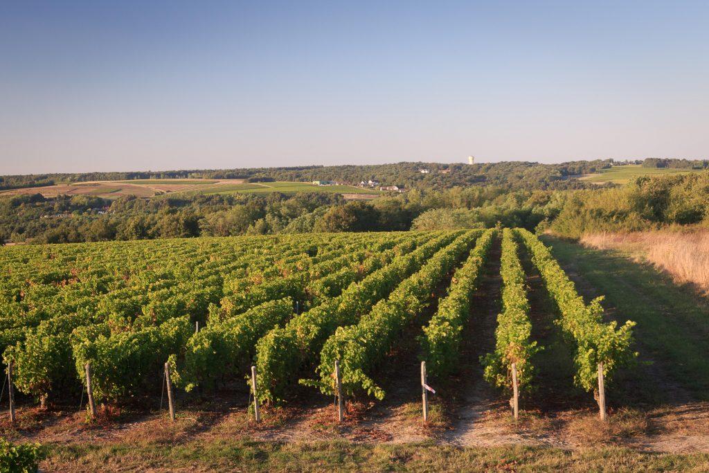 Vineyard DOMAINE DE LA ROCHETTE