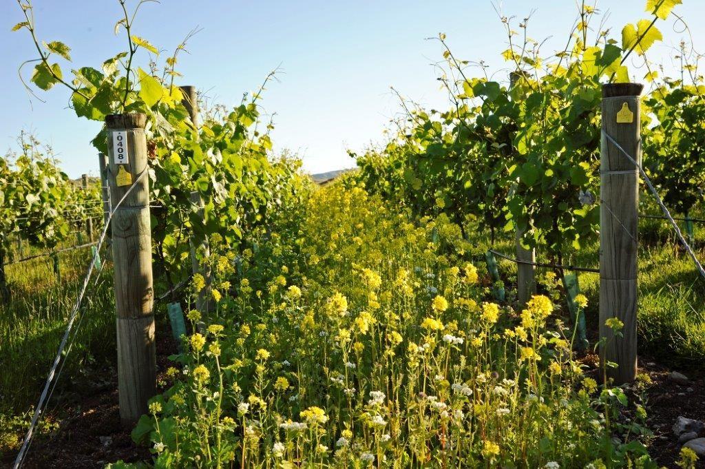 Foley Wines Wildflowers