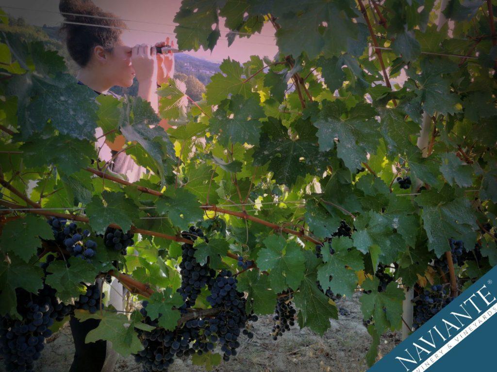 Naviante Winery