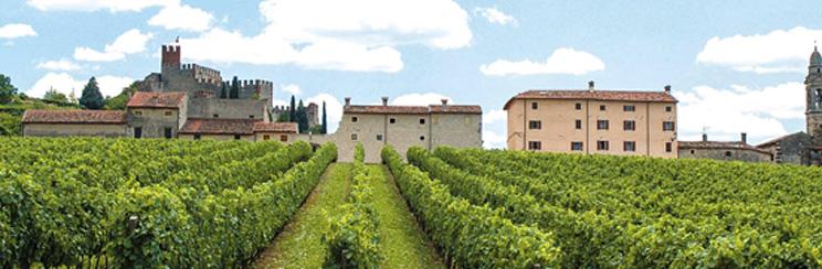 bixio_vineyardsinsoave