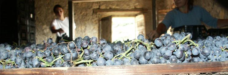 bixio_wines_inprocess