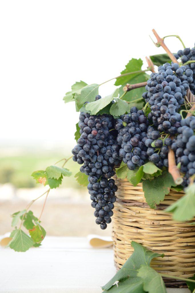 Amastuola Wines