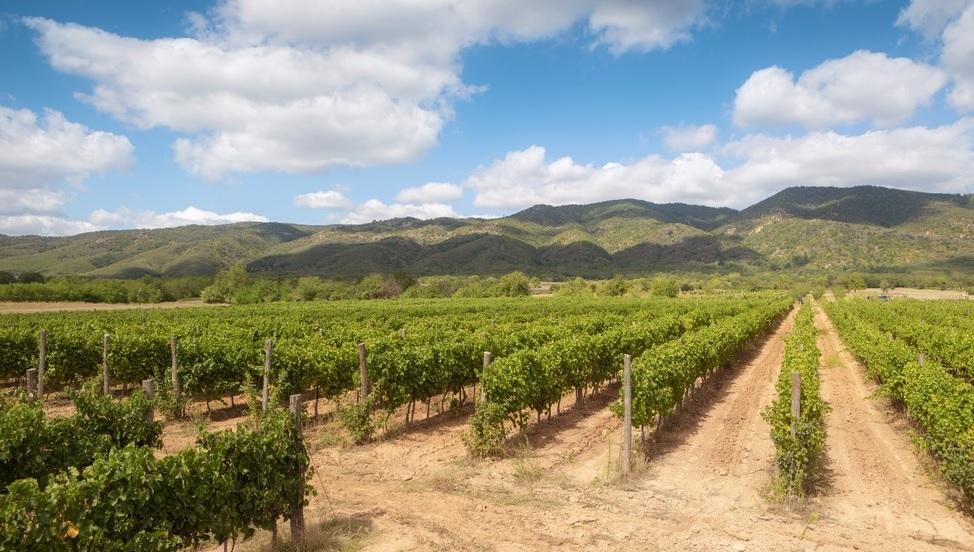 Aleksic-vineyards-asiaimportnews