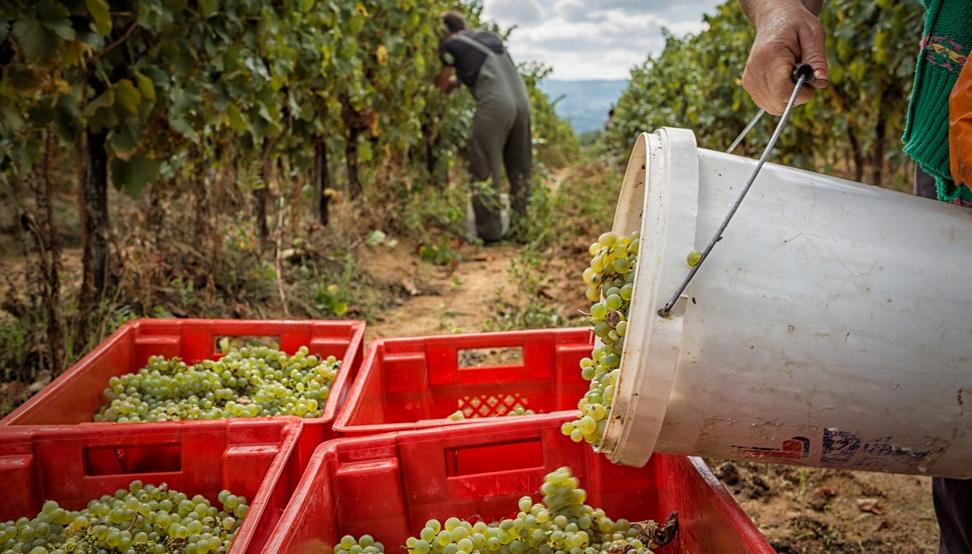 Aleksic-vineyards2-asiaimportnews