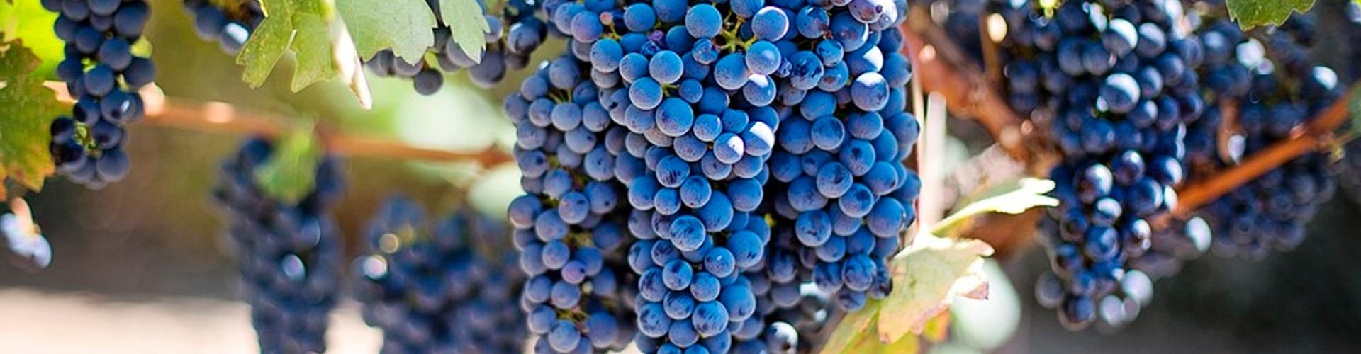 this is creavini vineyard