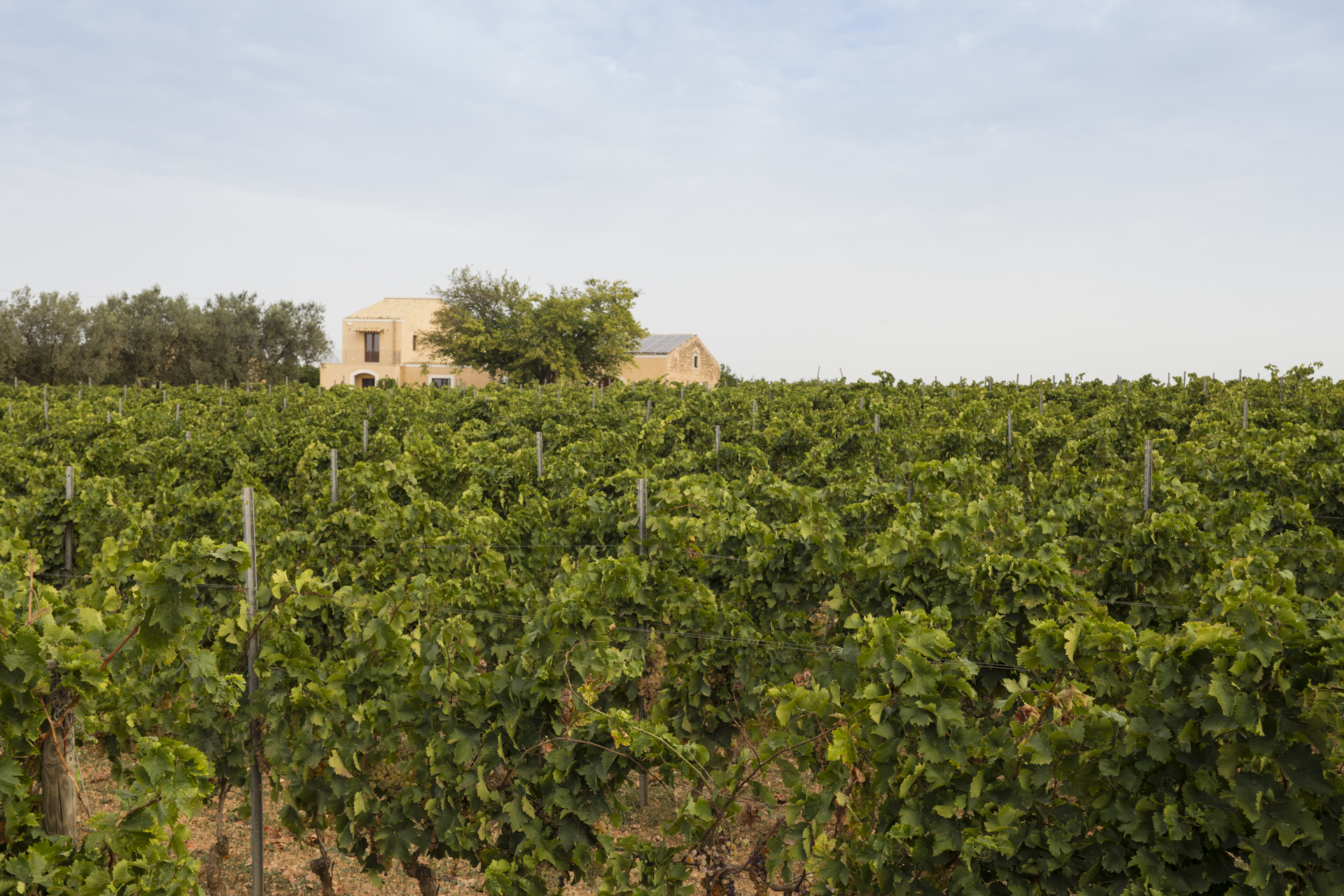 SantaTresa vineyard