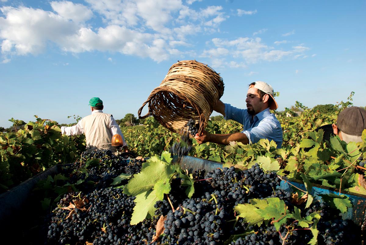 works in the vineyard