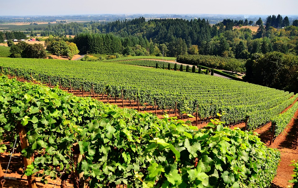 Weingut Honn Asia Import News