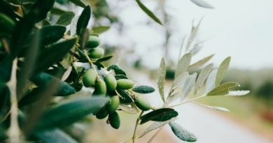 Botanicals Show Natural Immune Support Potential