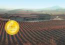 VIÑEDOS DE PAGANOS : Winery located in the Rioja Alavesa región